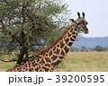 セレンゲティ国立公園 39200595