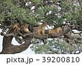 セレンゲティ国立公園 39200810