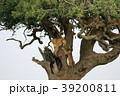 セレンゲティ国立公園 39200811