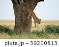セレンゲティ国立公園 39200813