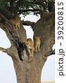 セレンゲティ国立公園 39200815