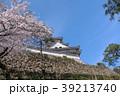 桜と高知城 39213740