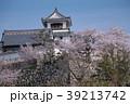 桜と高知城 39213742