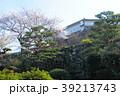 高知城の桜 39213743