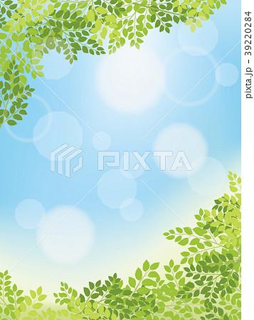 木漏れ日と青空 39220284