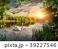 スワン ハクチョウ 白鳥の写真 39227546