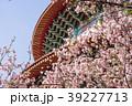 桜 さくら サクラの写真 39227713