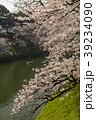 千鳥ヶ淵周辺の桜(東京都) 39234090