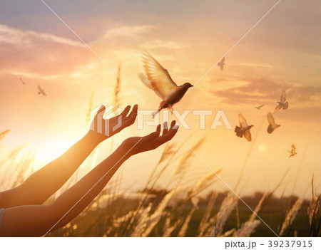 Woman praying, free the birds to nature on sunset 39237915