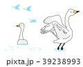 白鳥 39238993