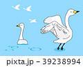 白鳥 39238994