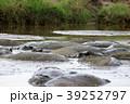 セレンゲティ国立公園  39252797