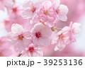 桜 陽光 花の写真 39253136