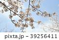 桜 39256411