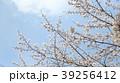 桜 39256412