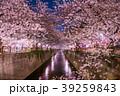 春 染井吉野 目黒川の写真 39259843
