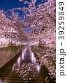 春 染井吉野 目黒川の写真 39259849