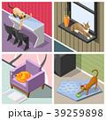 ねこ ネコ 猫のイラスト 39259898