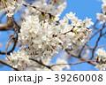桜と青空 39260008