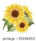ひまわり 向日葵 花のイラスト 39266953