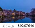 井の頭公園夜桜(東京都-武蔵野市) 39267640