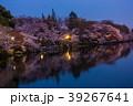 井の頭公園夜桜(東京都-武蔵野市) 39267641