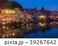 井の頭公園夜桜(東京都-武蔵野市) 39267642