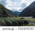 山の茶畑 39269595