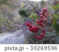 秋の実り 39269596
