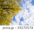 銀杏の木 39270578