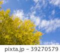 銀杏の木 39270579