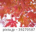 紅葉 39270587