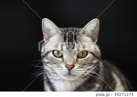 猫 顔のアップ 39271273