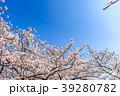 桜 青空 春の写真 39280782
