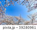 桜 青空 春の写真 39280961