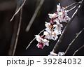 桜 枝垂れ桜 糸桜の写真 39284032
