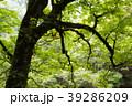 林 森 木の写真 39286209