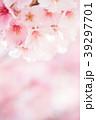 桜 春 ヨウコウ桜の写真 39297701