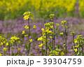 菜の花 菜花 花の写真 39304759