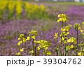 菜の花 菜花 花の写真 39304762
