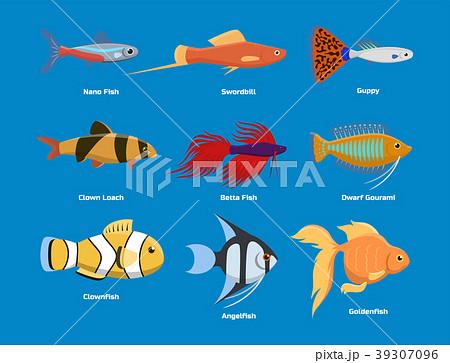 Exotic tropical aquarium fish different colors 39307096
