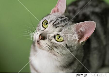 猫物語 39312302