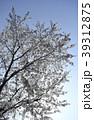 ソメイヨシノ 桜 さくら サクラ 青空 縦位置 コピースペース 咲く 春 季節 花見 39312875