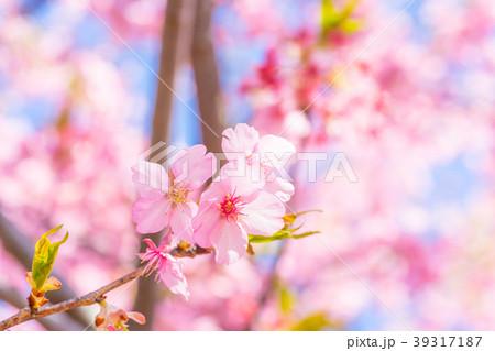 【東京都】満開の桜 39317187