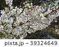 桜 39324649