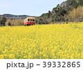 小湊鐵道 春 菜の花の写真 39332865