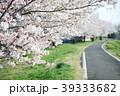 春の桜とサイクリングロード 39333682
