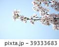 青空に伸びる春の桜 39333683