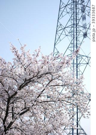 春の桜と鉄塔 39333687