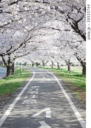 春の満開な桜のトンネルとサイクリングロード 39333744